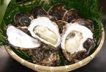 画像1: 岩牡蠣 1Kg入り(3〜4個) (1)
